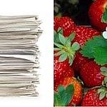Papier.Erdbeerli